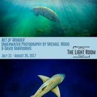 Net of Wonder: Underwater Photography by Michael Wood & David VanVoorhis