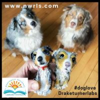 #doglove Display Case by Draketurnerlabs