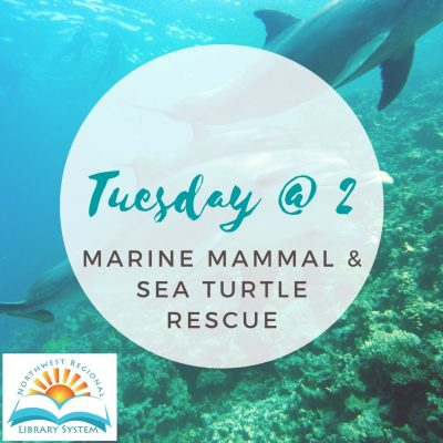 Tuesday at 2: Marine Mammal and Sea Turtle Rescue ...